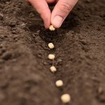 7 Financial Seeds to Plant in your Financial Garden